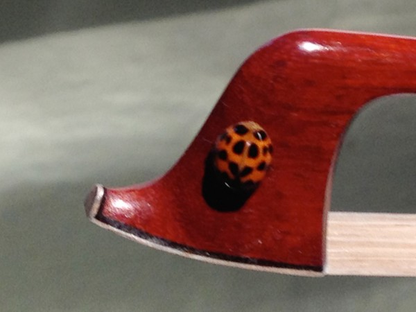 Lady Bug On Bow Tip-IMG_0923